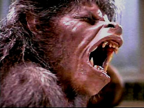 American werewolf pic