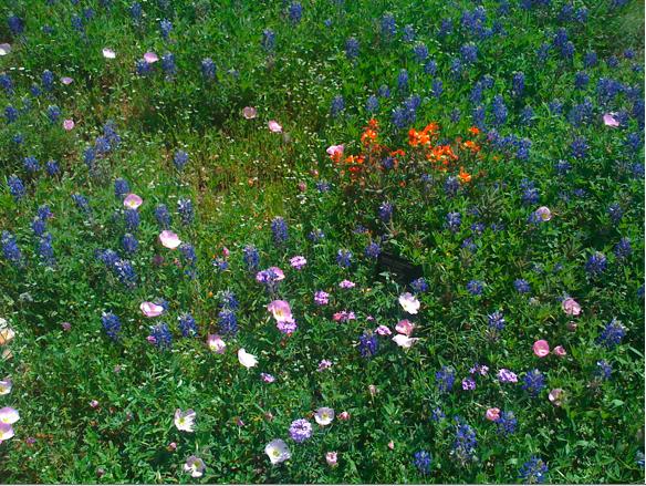Wildflower Center