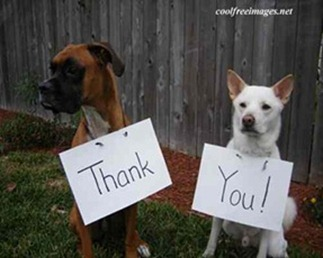 thankyouDogs