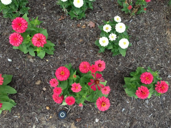 iphone5-flower-bed