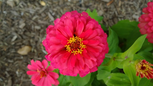 lumia-1020-flower