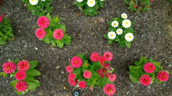 lumia-1020-flower-bed